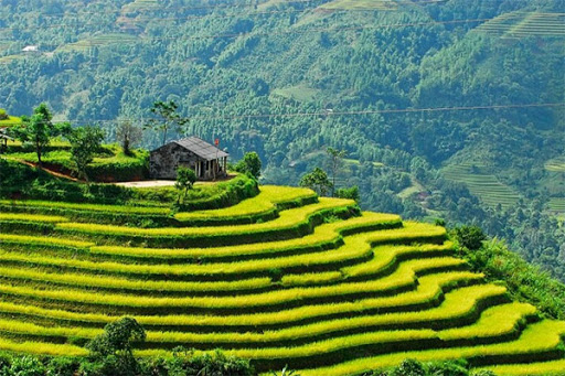 Dịch vụ SEO web chuyên nghiệp tại Hà Giang